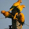 city parrots's picture
